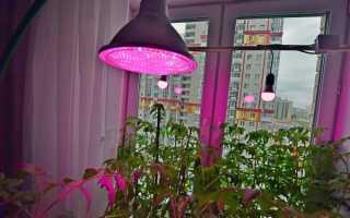 Можно ли подсвечивать растения светодиодными лампами