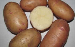 Картопля тирас