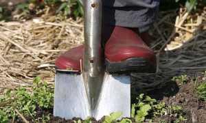 Виды лопат для огорода