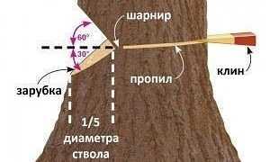 Как правильно валить деревья