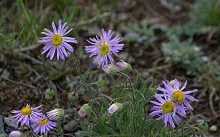 Дикорастущие вредители растения примеры