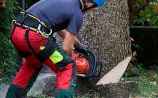 Как правильно спилить большое дерево