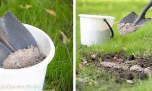 Когда вносить известь в почву