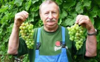 Виноградные питомники москвы и подмосковья