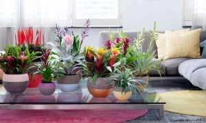 Лечебные домашние растения