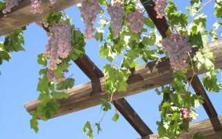 Итальянская пергола для винограда