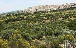 Средиземноморские растения