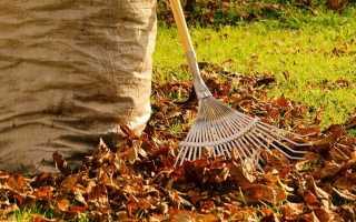Нужно ли убирать листья осенью