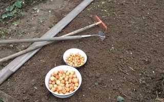 Как посадить под зиму лук севок