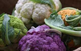 Цветная капуста как вырастить хороший урожай