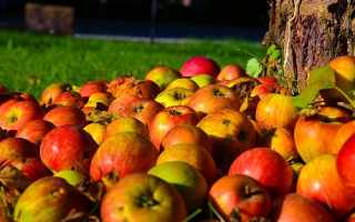 Как подкармливать деревья осенью