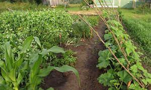 Дача сад огород на севере