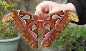 Все ли гусеницы становятся бабочками