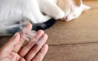 Кошачья шерсть как бороться
