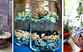 Как красиво посадить кактусы