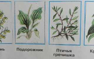 Растения которые растут возле дома