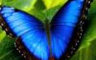 Как посадить пихту на даче