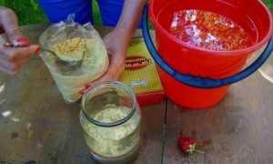 Сухая горчица для огорода от вредителей