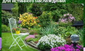 Гипоаллергенные комнатные растения