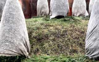 Чем укрывать растения на зиму