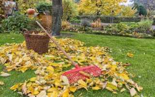 Уборка листьев осенью