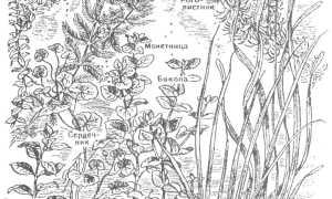 Водяной мох