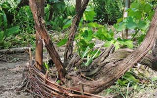 Поделки из лозы винограда