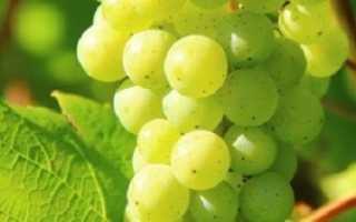 Виноград в сумах фоменко как ухаживать