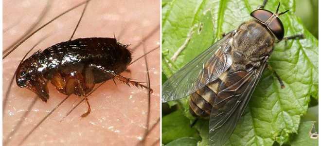 Опасные жуки