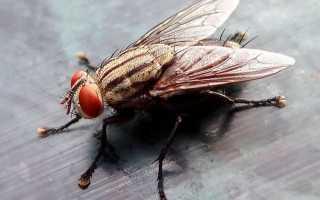 Как бороться с мухами в квартире
