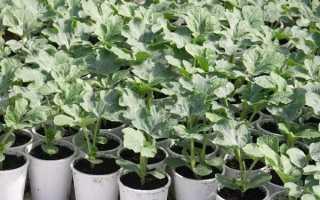 Как посадить арбузы и дыни