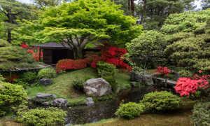 Растения японии