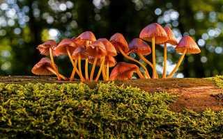 Переработка грибов