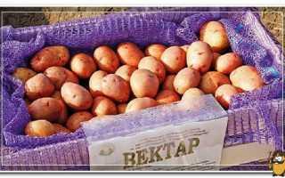 Картошка вектор