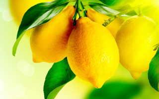 Рецепт лимонной настойки на спирту