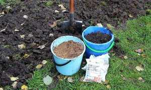 Чем лучше удобрить землю осенью