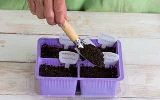 Как сеять капусту