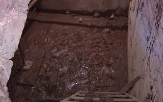 Как бороться со слизнями в подвале