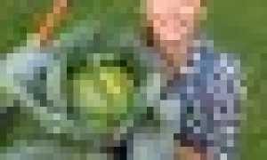 Как разбить грядки на огороде