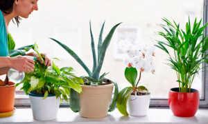 Лекарственные комнатные растения