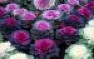Цветочная капуста