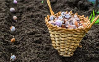 Подготовка земли к посадке чеснока под зиму