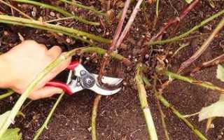 Уход за ежевикой осенью обрезка видео