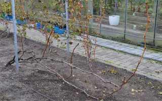 Чем обрабатывать виноград осенью перед укрытием