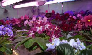 Какой световой поток нужен для растений