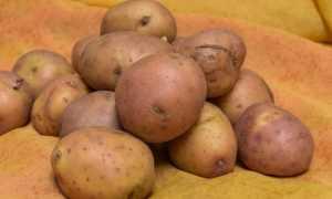 Блюда из мелкого картофеля