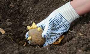 Какие удобрения вносить при посадке картофеля