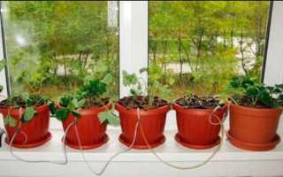Как выращивать гидропон