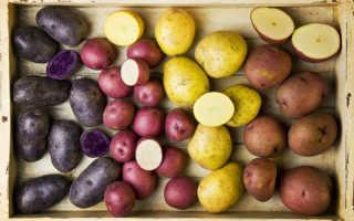 Как обновить картофель для посадки