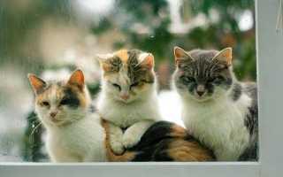Как избавиться от кота гуманно